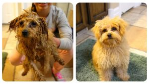 Cute Girls Hairstyles Puppy Braidy Bath Night Puppy Hygiene