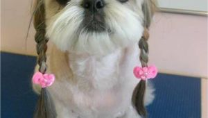 Cute Hairstyles for Dogs Dogs with Human Hairstyles Slapped Ham